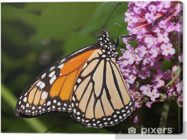 Tableau sur toile Papillon monarque alimentation sur un buisson de papillon - Thèmes