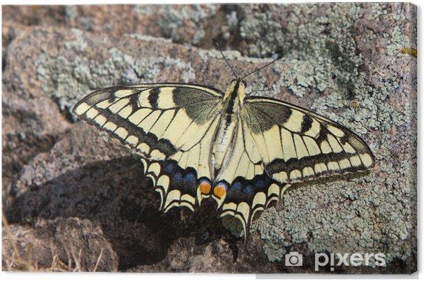 Tableau sur toile Papillon sur les rochers - Autres Autres
