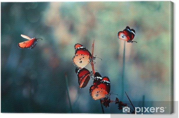 Tableau sur toile Papillon - Animaux