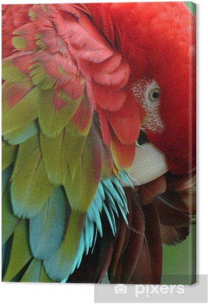Tableau sur toile Parrots - Thèmes