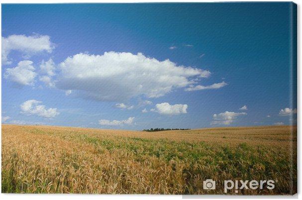 Tableau sur toile Paysage avec Grove et champ de blé - Agriculture