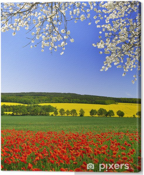 Tableau sur toile Paysage de printemps avec le champ de pavot rouge - Thèmes