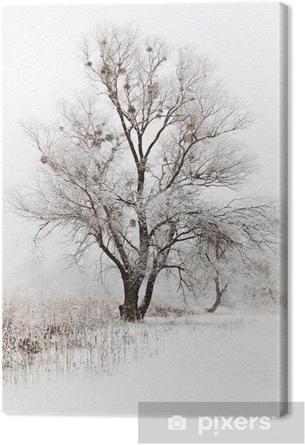 Tableau sur toile Paysage enneigé hiver avec des arbres - Saisons
