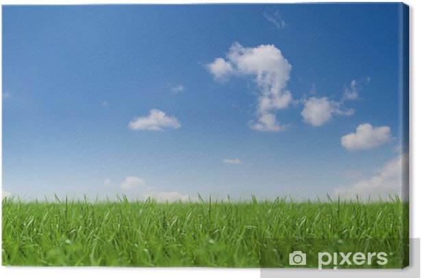 Tableau sur toile Paysage / Sky / Herbe - Nature et régions sauvages