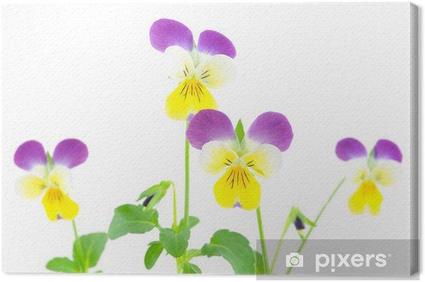 Tableau sur toile Pensées violet-jaune - Fleurs