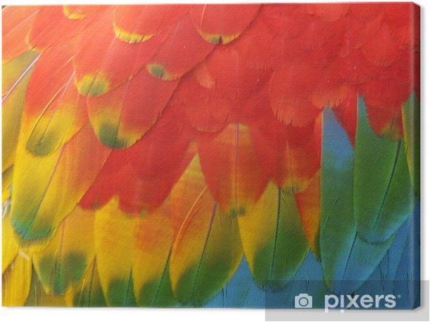 Tableau sur toile Perroquet - Oiseaux