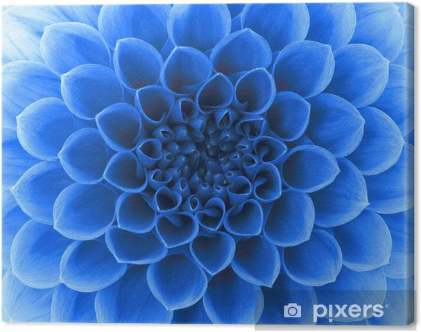 Tableau sur toile Pétales abstraits - Fleurs