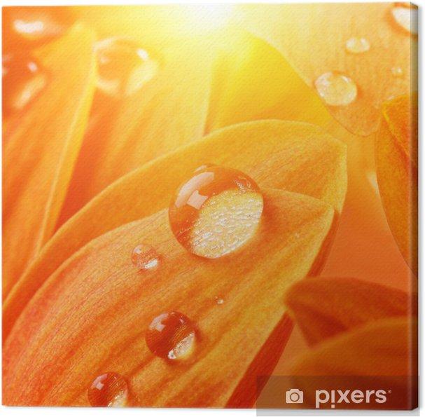 Tableau sur toile Pétales de fleurs d'oranger avec des gouttes d'eau sur l' - Fleurs