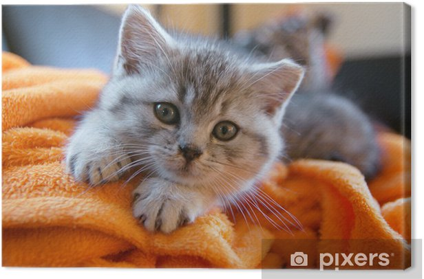 Tableau sur toile Petit chat gris couché sur une couverture orange sur le canapé - Thèmes