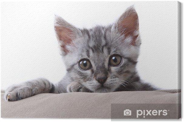 Tableau chat gris portrait 2 tableaux sur toile petit chat gris sur l 39 oreiller
