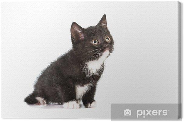 Tableau chaton noir gris blanc 5 tableaux sur toile petit chaton noir et blanc regardant