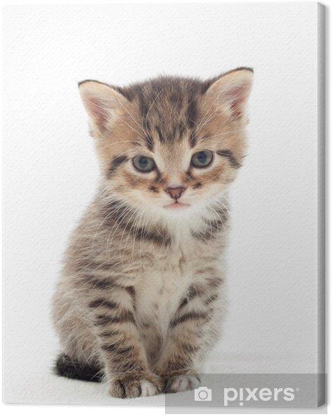Tableau sur toile Petit chaton sur fond blanc - Thèmes