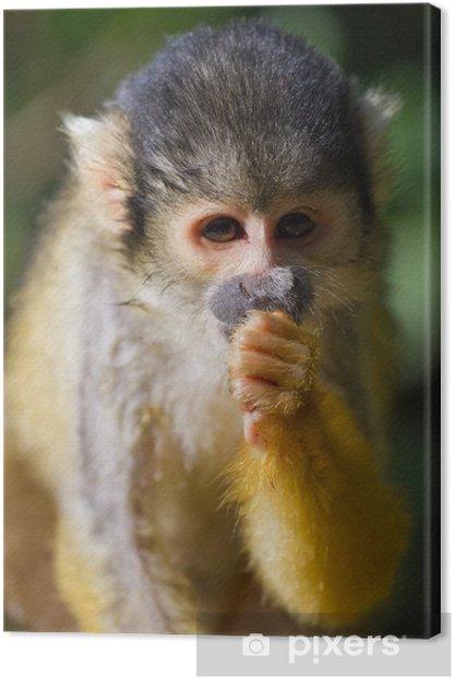 Tableau sur toile Petit singe - Mammifères