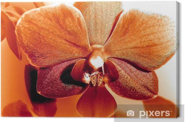 Tableau sur toile Phalaenopsis - Fleurs