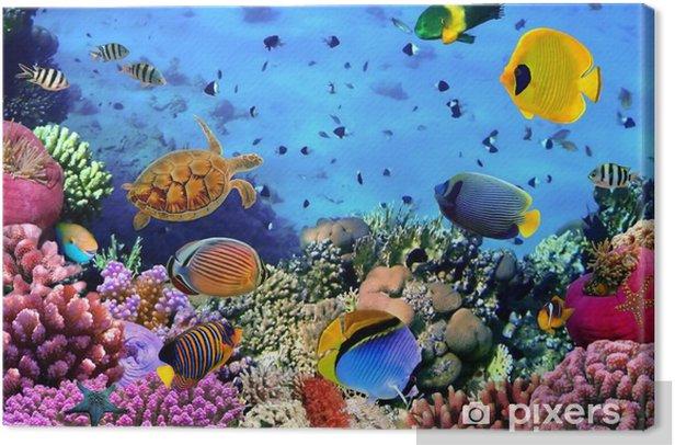 Tableau sur toile Photo d'une colonie de corail -