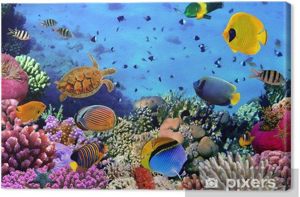 Tableau sur toile Photo d'une colonie de corail - Thèmes