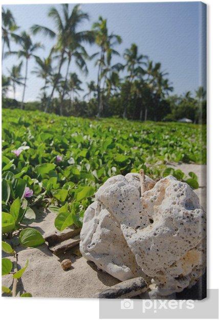 Tableau sur toile Pierre blanche en face de prairies pohuehue à la plage Kaunaoa - Amérique