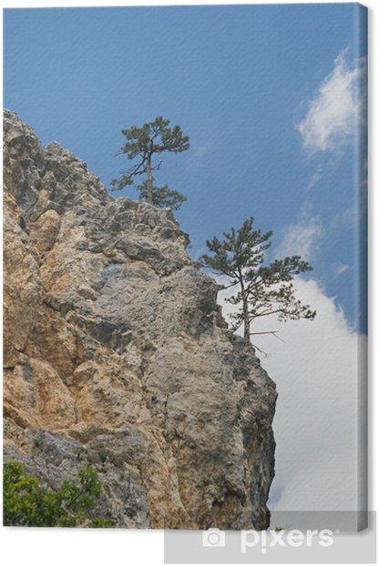 Tableau sur toile Pins sur une falaise - Europe