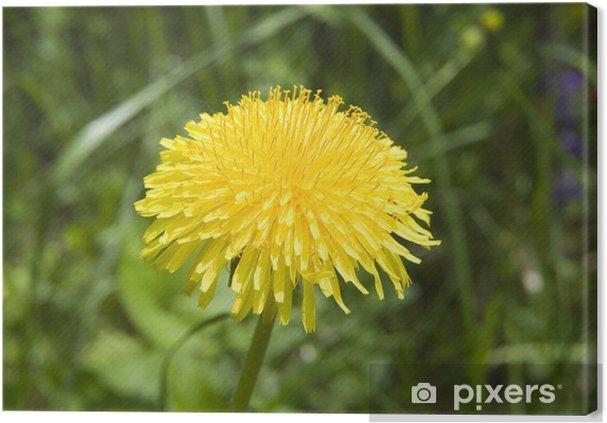 Tableau sur toile Pissenlit jaune - Fleurs