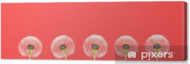 Tableau sur toile Pissenlit sur fond coloré. rendu 3d - Fleurs et plantes