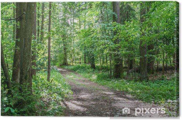 Tableau sur toile Piste forestière à travers bois verdoyant - Saisons