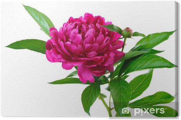 Tableau sur toile Pivoine rouge - Fleurs