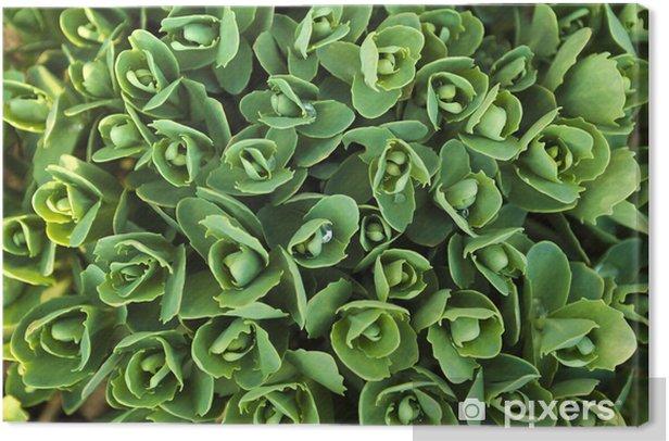 Tableau sur toile Plante décorative. - Plantes