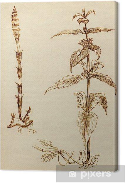 Tableau Sur Toile Plantes Médicinales Dessin à La Main Fleur Principale Ortie