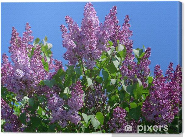 Tableau sur toile Pleine lilas commun soufflé - Arbres
