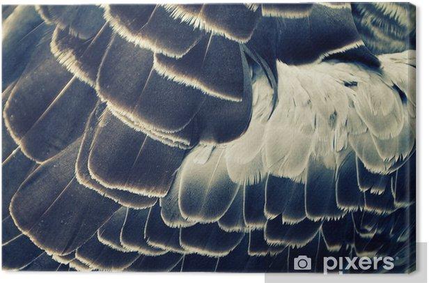 Tableau sur toile Plumage de fond d'oiseau - Animaux
