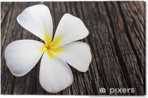 Tableau sur toile Plumeria ou frangipanier. - Fleurs