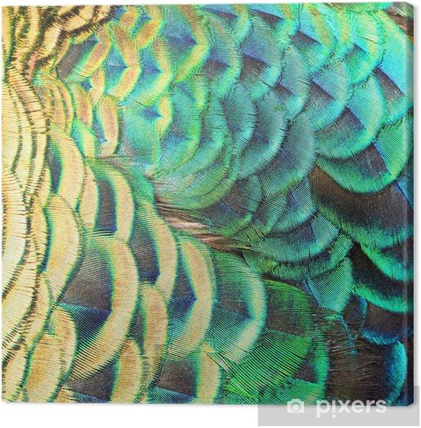 Tableau sur toile Plumes de paon vert - Matières premières