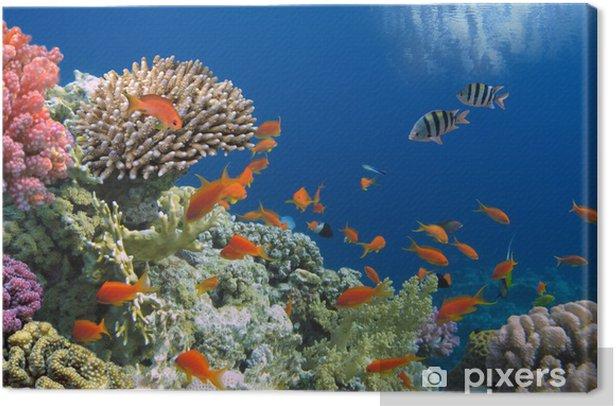 Tableau sur toile Poissons tropicaux sur les récifs coralliens de la mer Rouge - Destin
