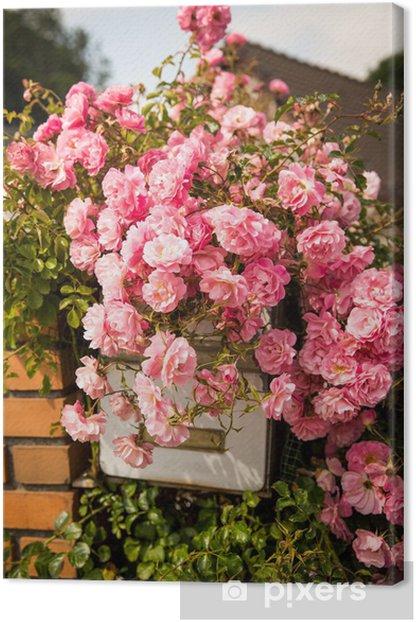 Tableau sur toile Pomme d'arrosoir - Fleurs