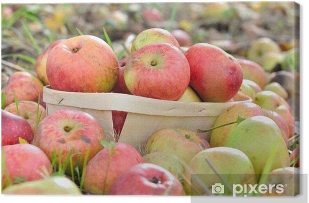 Tableau sur toile Pommes dans barquette - Agriculture