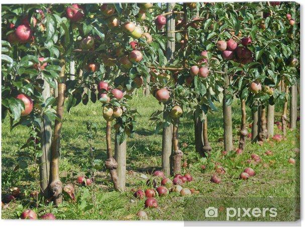 Tableau sur toile Pommes exceptionnels - Agriculture