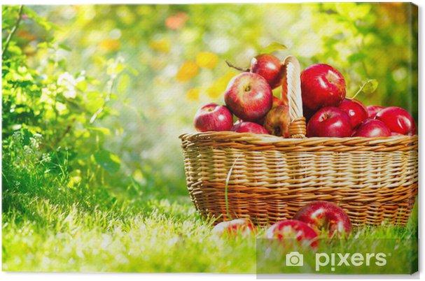 Tableau sur toile Pommes organiques dans un panier extérieur - Maisons et jardins