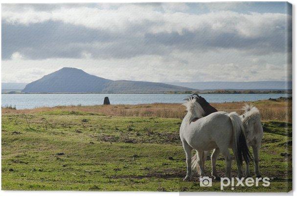 Tableau sur toile Poneys en Islande paysage - Europe
