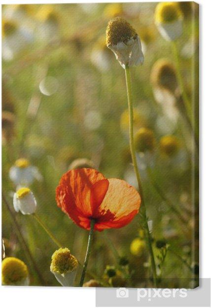 Tableau sur toile Poppie vert et champs cammomile - Saisons