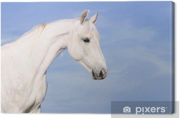 Tableau sur toile Portrait de cheval blanc sur fond de ciel TKE - Sports individuels