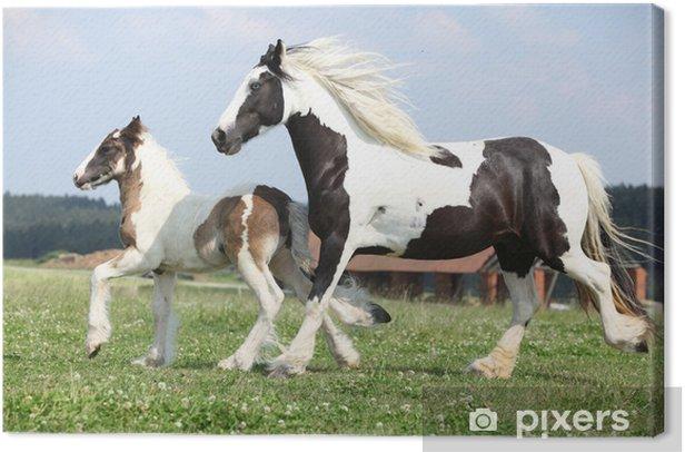 Tableau sur toile Portrait de la belle cheval arabe - Thèmes