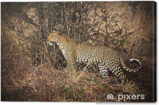 Tableau sur toile Portrait Leopard - Afrique
