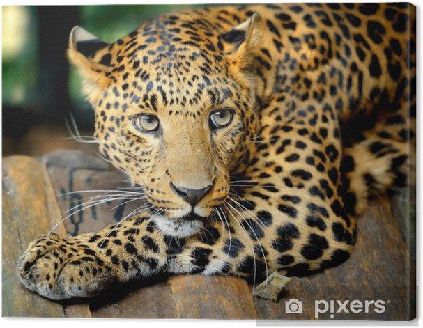 Tableau sur toile Portrait Leopard - Mammifères