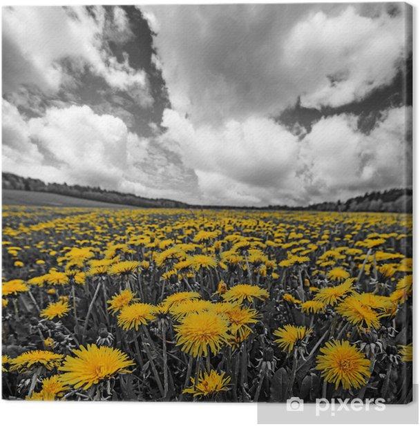 Tableau sur toile Prairie au printemps avec des pissenlits. - Campagne