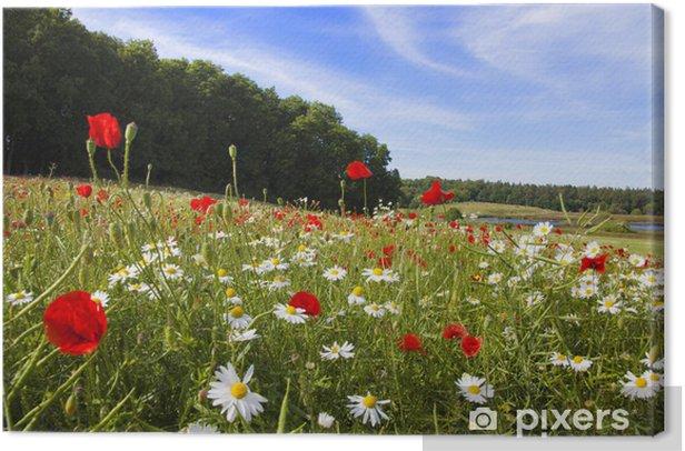 Tableau sur toile Pré d'été sur l'île de Rügen - Saisons