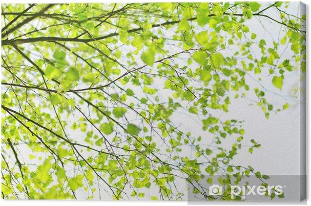 Tableau sur toile Printemps branche d'arbre de bouleau - Saisons