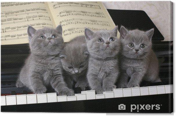 Tableau sur toile Quatre chatons britanniques sur le piano - Thèmes