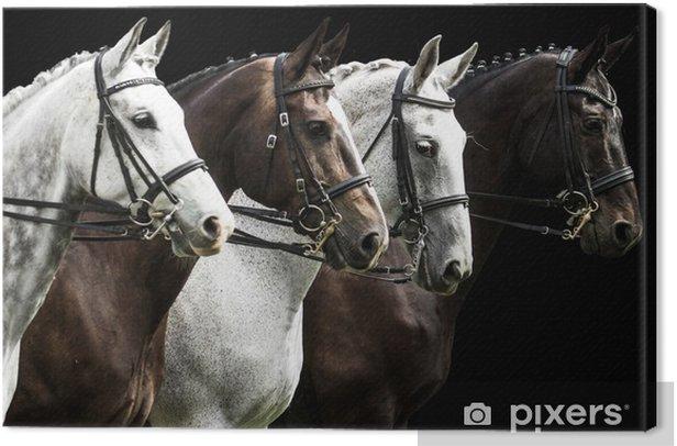 Tableau sur toile Quatre chevaux en compétition de dressage isolé sur noir - Thèmes