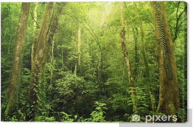 Tableau sur toile Rain fores - Forêt