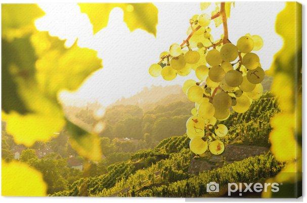 Tableau sur toile Raisins dans le vignoble - Thèmes